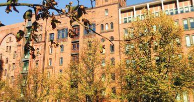 Dies könnte ein lauschiges Plätzchen sein, Lindenbäume in der Speicherstadt (Foto: J. Munzinger)