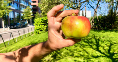 Natürlich wurden die Äpfel zwischendurch auch gleich probiert. Die Gravensteiner waren nicht so saftig wie erhofft, dafür schmeckte der Boskoop angenehm säuerlich-frisch. © Wolfgang Weisbrod-Weber