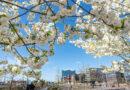 Ostern 2021 steht auch nach einem Jahr immer noch im Lockdown-Modus, doch der Frühlingsanfang und das Nachvorneblicken schaffen die Stimmung für torösterliche Auferstehung. © Thomas Hampel