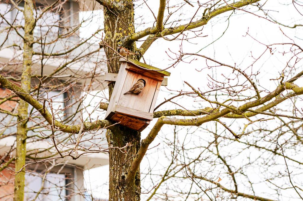 Ein Park in der inneren Stadt ist ein Schutzraum nicht nur für die Menschen, sondern auch für Tiere und Pflanzen. Das Netzwerk HafenCity setzt sich dafür ein, den Naturschutz im Quartier zu stärken. © Thomas Hampel